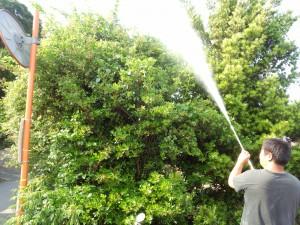 空き家の害虫駆除